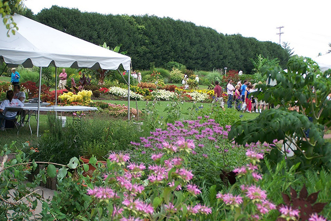 Bloomsday ut gardens