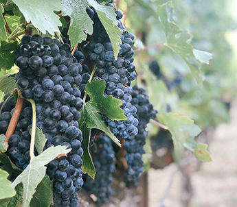 tennessee grape production workshops